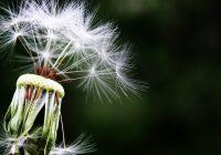 identificarea alergiilor